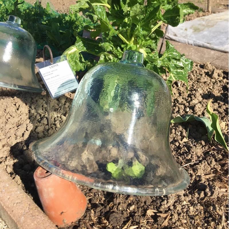 Cloche a melon de jardin ou cloche victorienne en verre - Cloche de jardin en verre ...