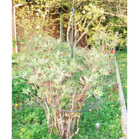 Tuteur Pyramide Treillis de Jardin Tuteur à Fleurs Plantes Extérieur en Fer Forgé Noir 40x40x195cm