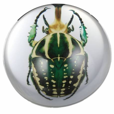 Presse Papier Boule de Sulfure Insecte Fossilisé Vert Décoration de Bureau en Verre 3,5x7,5x7,5cm