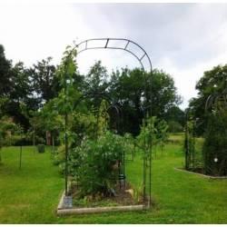 Grande Arche Simple Arche à Fleurs Rosiers Tuteur Plantes de Jardin Passage en Fer Forgé 40x170x250cm